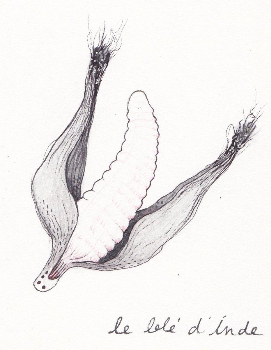 Le blé d'Inde, 2011, feutre sur papier